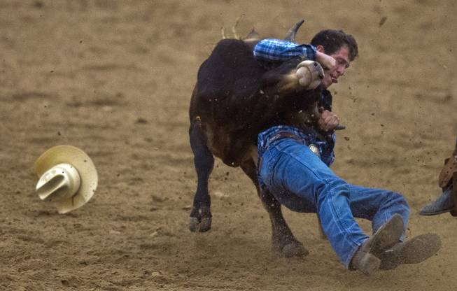 Feather River steer wrestler Brandon Mackenzie works to take a steer down to the dirt during the West Coast Regional Finals Rodeo at South Point Arena  on Friday, April 25, 2014.