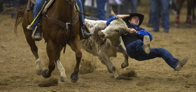 UNLV steer wrestler Dylan Marks fights to take a steer down to the dirt during the West Coast Regional Finals Rodeo at South Point Arena  on Friday, April 25, 2014.