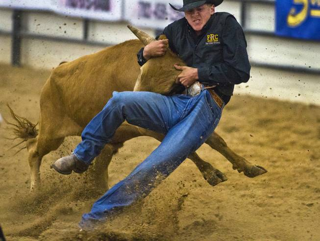 Feather River steer wrestler Dane Browning is driven back by a steer during the West Coast Regional Finals Rodeo at South Point Arena  on Friday, April 25, 2014.