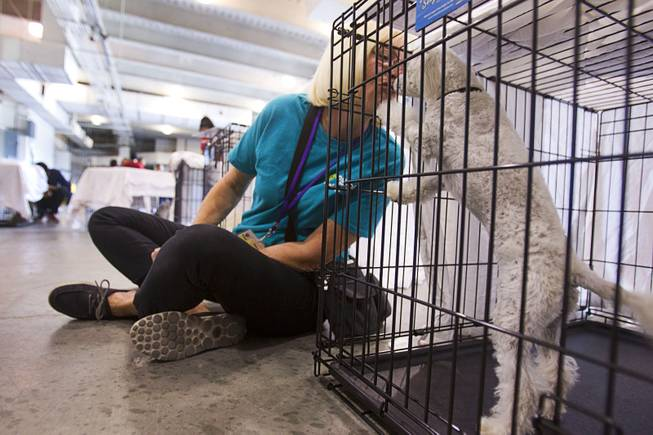 Volunteer Debra Ottena gives a kiss to Lucy, a two-year-old toy poodle, before the Animal Foundation's 11th annual Best in Show competition at the Orleans Arena Sunday, April 27, 2014.