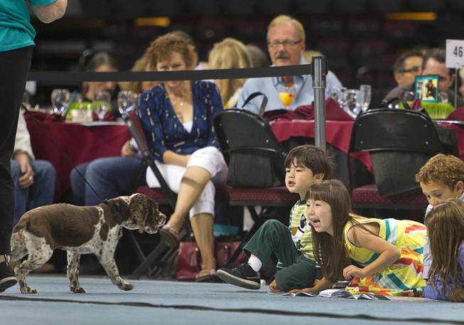 Children react to Jitterbug, a one-year-old Springer Spaniel mix, during the Animal Foundation's 11th annual Best in Show competition at the Orleans Arena Sunday, April 27, 2014.