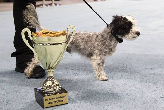 Best of Show winner Jackson, an 18-month-old Lhasa Apso mix, stand behind the trophy during the Animal Foundation's 11th annual Best in Show at the Orleans Arena Sunday, April 27, 2014.