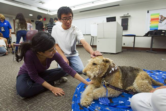 "Sahar Nawabzada, left, and Stanley Tat pet Cassidy, a seven-year-old Airedale Terrier, during ""Paws"" for a Study Break at UNLV's Lied Library Wednesday, May 7, 2014. The library sponsored the second annual study break with certified therapy dogs from Love Dog Adventures to help calm students stressing over final exams."