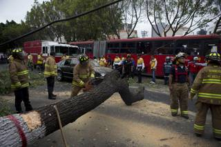 Firefighters cut apart a fallen tree that took down power lines and landed on a car, after an earthquake shook the city and sent people scurrying from office buildings, in Mexico City, Thursday, May 8, 2014.