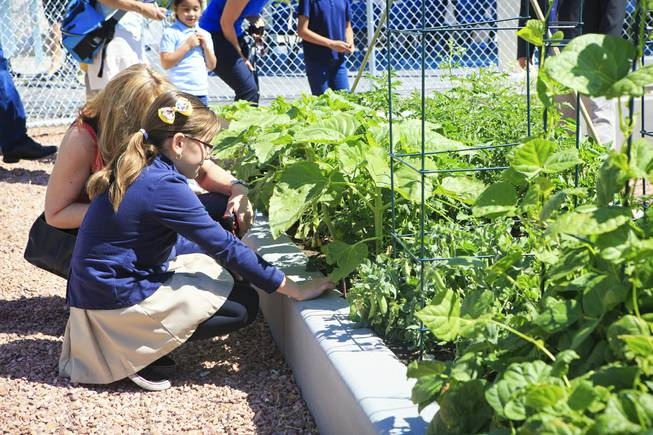 Students of the Garden Club at Lunt Elementary were onsite at Lunt Elementary for the unveiling of the school's edible garden, Garden University on Friday, May 2, 2014.