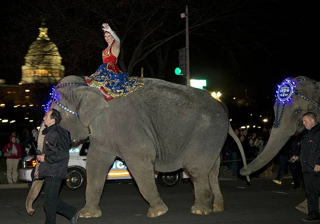 A performer waves as elephants with the Ringling Bros. and Barnum & Bailey show walk in front of the Capitol in Washington, D.C., on their way to the Verizon Center on March 19, 2013.