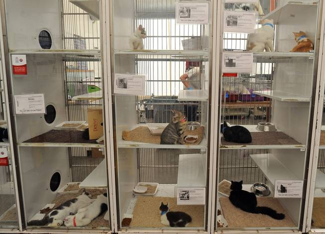 Lied Animal Shelter
