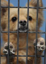 A nose and paws poke through the wire mesh of a cage as a canine beckons for attention inside the Lied Animal Shelter on Thursday, May 22, 2014.