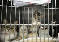 A mother cat and her litter of curious kittens look out from their cage inside the Lied Animal Shelter Thursday, May 22, 2014.