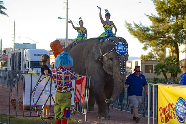 Cossack Riders Albina Tanasheva, left, and Maria Maltseva of the Ringling Bros. and Barnum & Bailey Circus ride Asian elephants to the Welcome to Fabulous Las Vegas sign Wednesday, June 18, 2014. The circus performs at Thomas & Mack Center Thursday through Sunday.