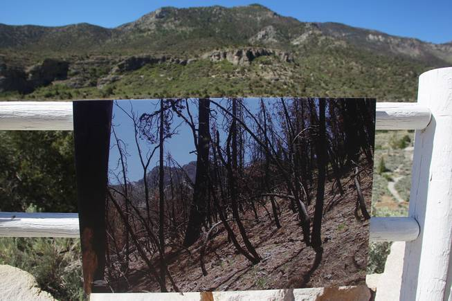 A photo showing the damage caused by the Carpenter I fire is seen during a news conference to highlight the dangers of climate change and its effects on the Spring Mountains Tuesday, June 24, 2014.