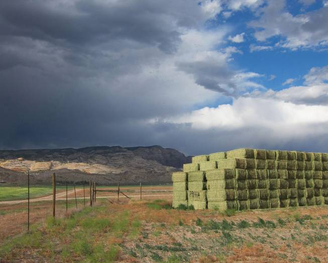 Hay bales rest in a field at the Escalante Ranch, a 22,000 ranch in northeast Utah owned by a Chinese company that supplies alfalfa to China's dairy industry. In the background, dark clouds hang over the nearby Dinosaur National Monument near Jensen, Utah, June 11, 2014.