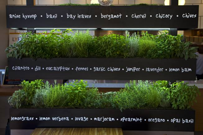 The interior of the new Henderson restaurant Lyfe Kitchen features a live herb garden as they ready to open at The District on Tuesday, July 8, 2014.
