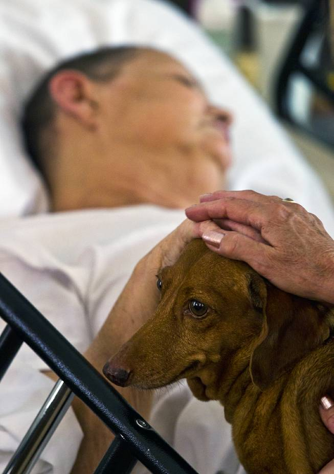 Linda Rolain is visited by her dog Ammo at her hospital bed in their living room just days before she passed away following brain surgery in May on Wednesday, June 25, 2014.  She should have had surgery much sooner but due to the problems on the exchange she wasn't able to receive insurance until mid May.
