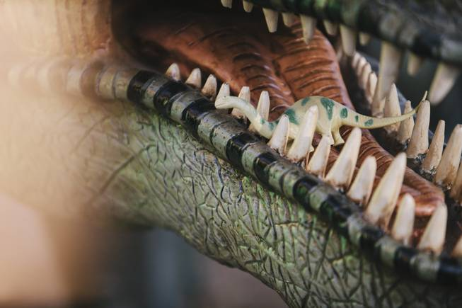 A close up of Pete the dinosaurs mouth on display at Shang-Gri La Prehistoric Park in Las Vegas, Nev on July 12, 2014.