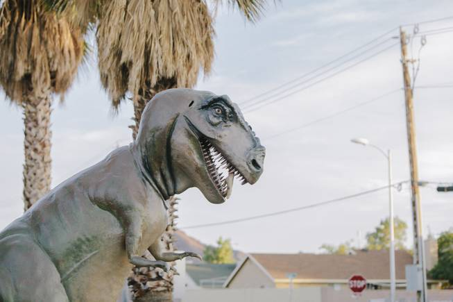Tex the T-Rex overlooks the neighborhood at Shang-Gri La Prehistoric Park in Las Vegas, Nev on July 12, 2014.