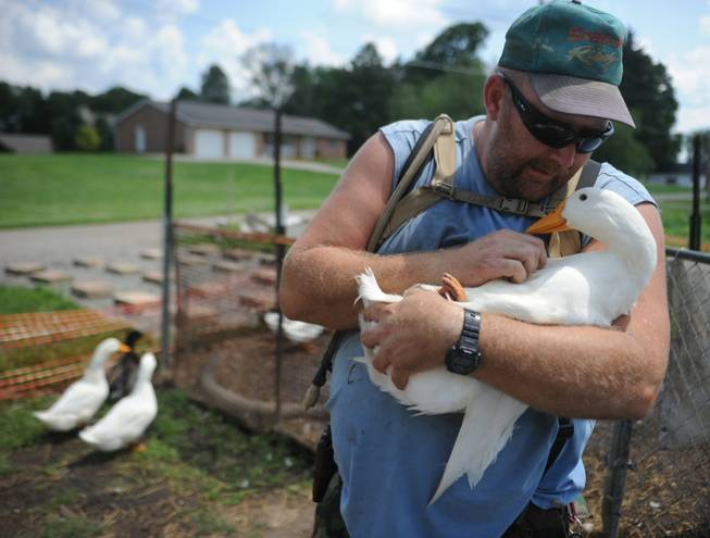 Iraq war veteran Darin Welker, 36, holds one of his ducks at his home in West Lafayette, Ohio. Welker, who served a year in 2005 for the Army National Guard, says his 14 pet ducks serve as mental and physical therapy for him. He's worried he'll have to give them up after village officials told him in May he can't keep them on his property. Welker was cited with a minor misdemeanor June 23 for having the ducks in his yard. He is scheduled to appear in Coshocton Municipal Court for a hearing Wednesday, July 23, 2014, and could face a $150 fine.