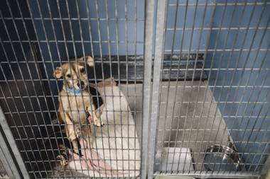 Nobody wants the animals to die, but last year more than 20,000 pets were euthanized in Southern Nevada. What will it take to save them all?