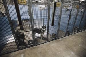 Various dogs in holding at the Lied Animal Shelter Tuesday, July 22, 2014.