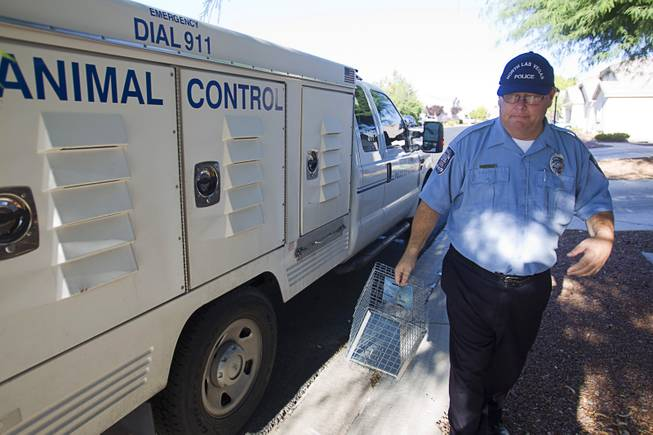 North Las Vegas Animal Control officer Dale Smock goes to pick up a trapped cat by a home in North Las Vegas Thursday Aug. 14, 2014. Smock recently helped clear the house of over 100 cats. The house has since been condemned.