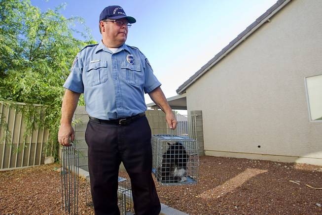 North Las Vegas Animal Control officer Dale Smock picks up a trapped cat by a home in North Las Vegas Thursday Aug. 14, 2014. Smock recently helped clear the house of over 100 cats. The house has since been condemned.
