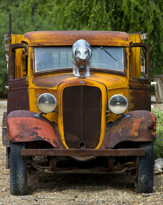 The original Chevy hood ornament on this old truck has been replaced with a large metal pig at R.C.Farms, Inc., on Wednesday, August 13, 2014.