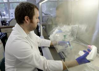 In this Wednesday, July 31, 2014 photo,  scientist Calum Russell loads bacteria from different insects into a vial which will put into an Asian Citrus Psyllid to see if certain strains of bacteria will protect the psyllid, at the University of Florida Citrus Research and Education Center, in Lake Alfred, Fla. Some of the world's top researchers are working at this center to unlock the puzzle of citrus greening caused by the psyllid. The invasive bug carries bacteria that are left behind when the psyllid feeds on a citrus tree's leaves.