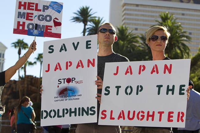 Jonathan Klatt and his wife Yvonne carry signs during a protest in front of the Mirage Sunday, Aug. 30, 2014. About 30 people came out to protest the annual capture and killing of dolphins in Taiji, Japan.