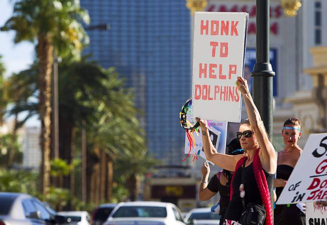 Debora Toro holds a sign and a tambourine during a protest in front of the Mirage Sunday, Aug. 30, 2014. About 30 people came out to protest the annual capture and killing of dolphins in Taiji, Japan.