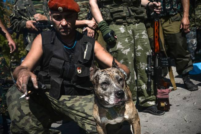 "A Pro-Russian rebel holds a dog named Devka with hand grenade attached to the leash in Donetsk, eastern Ukraine, Wednesday, Sept. 3, 2014. A day ahead of a NATO summit, Russian President Vladimir Putin issued his own peace plan for eastern Ukraine, calling on the Russian-backed insurgents there to ""stop advancing"" and urging Ukraine to withdraw its troops from the region. Hours earlier, Ukraine had issued a vague statement about agreeing with Putin on cease-fire steps. The separatists rejected the move, saying no cease-fire was possible without a pullback by Ukraine, while Putin's spokesman claimed that Moscow could not agree to a cease-fire because it was not a party to the conflict."