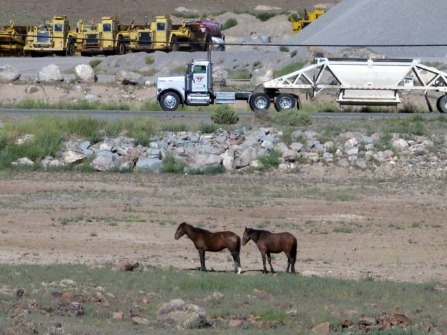 "Mustangs graze at the Tahoe Reno Industrial Center 15 miles east of Sparks on Thursday, Sept. 4, 2014. Tesla Motors Inc. plans to build a 6,500-worker ""gigafactory"" to mass produce cheaper lithium batteries for its next line of more-affordable electric cars near the center."