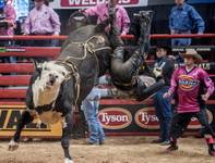 Round 2 of the 2014 PBR Built Ford Tough Series World Finals at the Thomas & Mack Center on Thursday, Oct. 23, 2014, at UNLV.