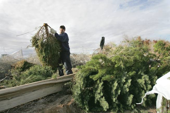 In this 2009 file photo, Bruce Monford, a maintenance worker with the Clark County Parks and Recreation Department, sorts through Christmas trees at a tree recycling center at Sunset Park.