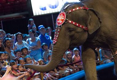 "After 146 years, the curtain is coming down on ""The Greatest Show on Earth."" The owner of the Ringling Bros. and Barnum & Bailey Circus told the Associated Press that the show will close forever in May. ..."