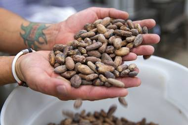 A worker displays cacao beans at the Hexx chocolate room.