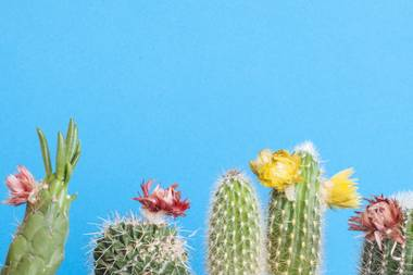 Cactus buyers are taking to online forums to lament venomously and quaintly about the deception.