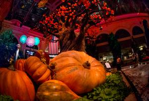2015 Fall Bellagio Display