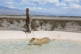 Nevada's patchwork rules leave door open to exotic pets - Las Vegas
