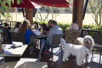 There are several ways to enjoy Las Vegas' all-too-brief springtime, from hiking our trails to visiting our parks and attractions — but nearly all of them should include a meal at a restaurant with inviting patio seating ...