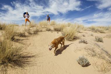 Spoon the dog, Erin Ryan, and Kristen Peterson hike on the Kelso Dunes at the Mojave National Preserve on March 25, 2016.