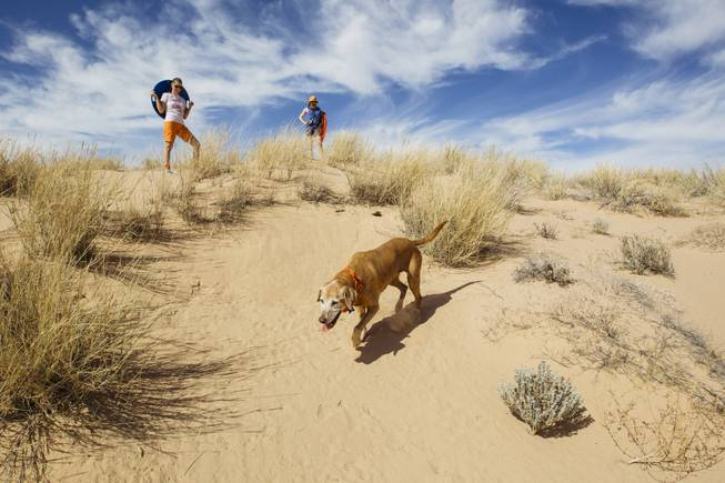 Kelso Dunes Beagle Scouts