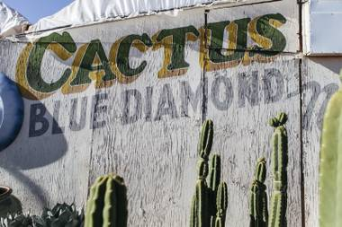 Cactus Joe's Blue Diamond Nursery on April 18, 2016.