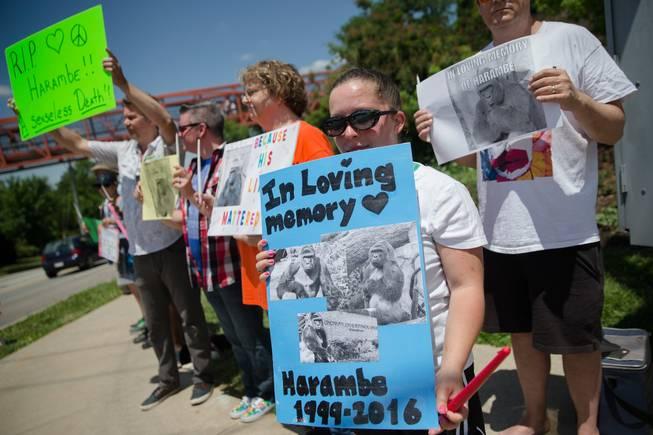 Michelle Gregg Photos: Pictures of Cincinnati Zoo Mom