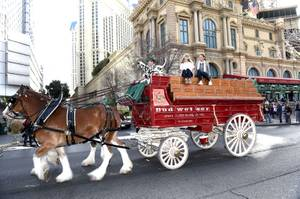 Budweiser Clydesdales on the Strip
