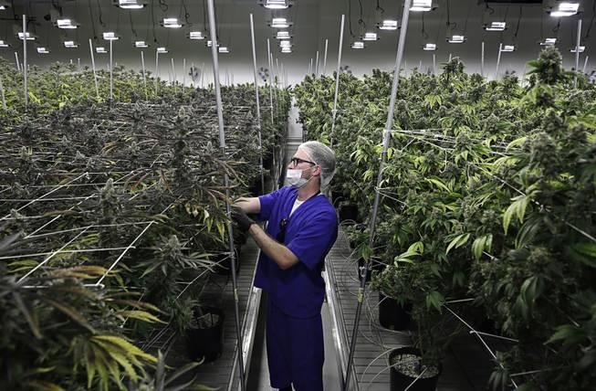 Nevada first state to ban pre-employment marijuana tests