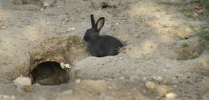 Feral bunnies overrun a Las Vegas facility though have a ...