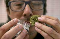 As regulators in California prepare for the start of recreational marijuana sales in January, people in the industry say they are concerned that the rollout may not be as smooth as ...