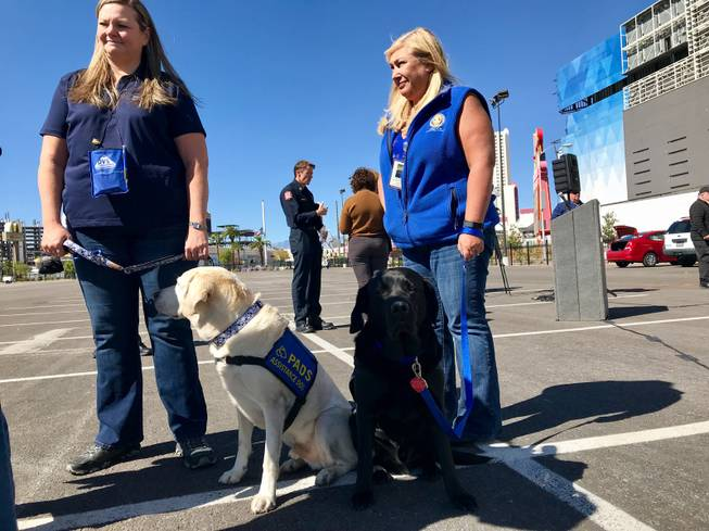 Therapy dogs stand ready to comfort those affected by the mass shooting on the Las Vegas Strip.