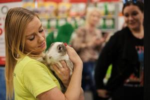 Lulu Topalian from Los Angeles, CA, seen in the background, looks on as Stacey Taylor from Bunnies Matter Las Vegas (a bunny rescue organization) brings out Bella her newly adopted bunny during one of their adoption events at a local PetSmart, Saturday, Nov. 4, 2017.