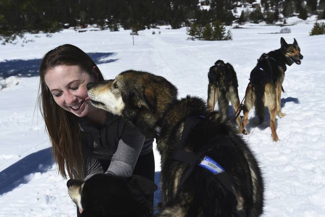 In this March 23, 2017 photo, writer Sarah Litz joins the Wilderness Adventures Dog Sled Tours at Squaw Valley in California. Litz took a trip to Squaw Valley to experience something she had ever done before, dog sledding.